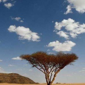 L'Arabie saoudite souhaite planter 10 milliards d'arbres