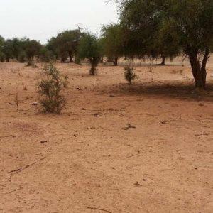 Niger: les attaques se multiplient dans les régions frontalières avec le Mali