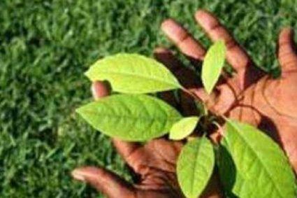 Environnement : 32 pays africains s'engagent à restaurer 126 millions d'hectares de terre (Documentaire)