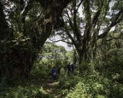 Le Rwanda veut planter 43 millions d'arbres